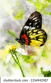 Watercolor painting of corlorful Butterfly (Delias pasithoe curasena)