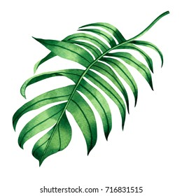 Watercolor painting fern green leaves,palm leaf isolated on white background.Watercolor hand painted illustration tropical exotic leaf for wallpaper vintage Hawaii style pattern.With clipping path