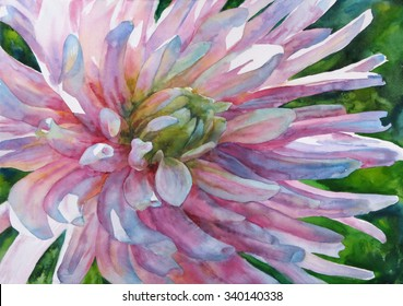 Watercolor painting. Flower aster.