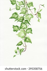 Watercolor painting of green ivy branches and leaves isolated on white