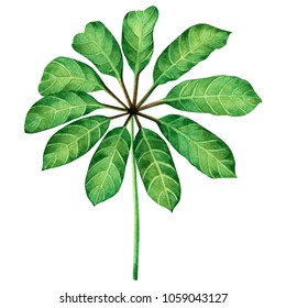 Watercolor painting green leaves,palm leaf isolated on white background.Watercolor hand drawn illustration tropical,aloha exotic leaf for wallpaper tree,jungle,Hawaii style pattern.With clipping path.