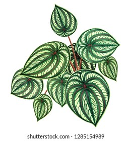 Watercolor painting green leaves,palm leaf isolated on white background.Watercolor hand drawn illustration tropical,aloha exotic leaf for wallpaper tree,jungle,forest Hawaii style pattern backdrop.