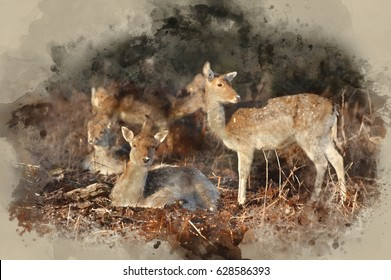 Watercolor painting of Herd of fallow deer in forest landscape