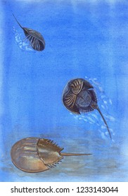 Watercolor painting of a horseshoe crab swimming in the sea