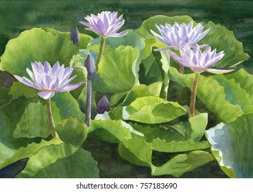 watercolor painting of lavender waterlilies on a pond