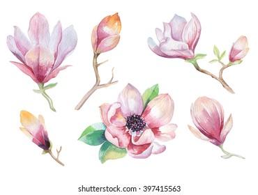 Watercolor Painting Magnolia flower wallpaper decoration. Hand drawn  floral illustration. Decorative  natural element. Vintage art  watecolour background.