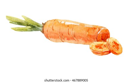 Watercolor painting on white background carrot, food illustration, Carrot slices