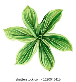 Watercolor painting palm leaf,green,coconut leaves isolated on white background.Watercolor hand drawn illustration tropical exotic leaf for wallpaper vintage Hawaii style pattern.With clipping path.