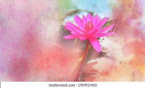 watercolor painting of pink water lily, lotus : Illustration