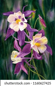 Watercolor painting of purple columbine flowers with a painted dark background.
