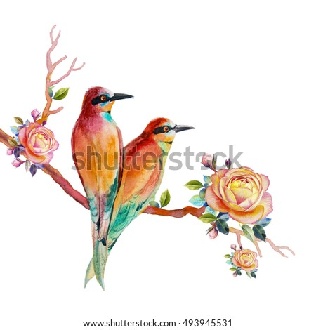 watercolor painting realistic illustration colorful bird stock