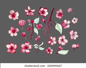 Watercolor painting Sakura flower set.Japanese flower painting.