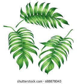 Watercolor painting set of tropical green leaves,palm leaf isolated on white background.Watercolor hand painted illustration tropical exotic leaf for wallpaper Hawaii style pattern.With clipping path