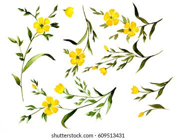 Watercolor painting Set of yellow wild flowers branches on white background