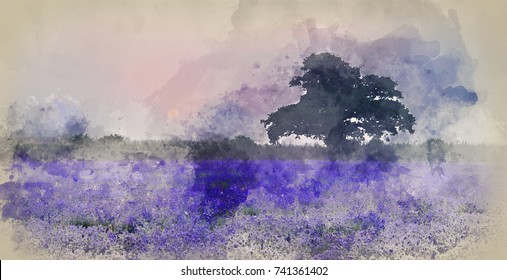 Watercolor painting of Stunning dramatic foggy sunrise landscape over lavender field in English countryside