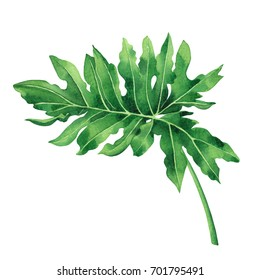 Watercolor painting tropical,palm leaf,monstera,green leaves isolated on white.Watercolor hand painted illustration tropical exotic leaf for wallpaper vintage Hawaii style pattern.With clipping path.