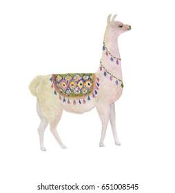 Watercolor painting white llama