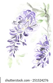 A watercolor painting of Wisteria flowers