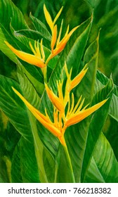 Watercolor painting yellow orange heliconia tropical flowers