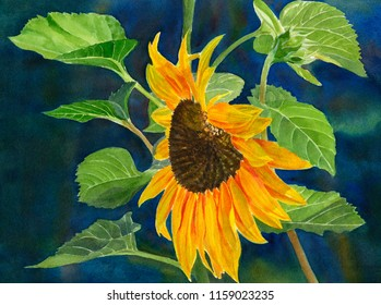 Watercolor painting of a yellow orange sunflower with leaves on a dark blue background.