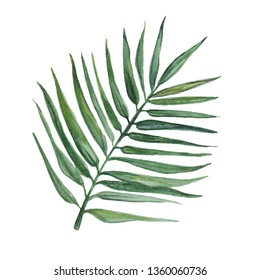 Watercolor palm leaf isolated on white background.