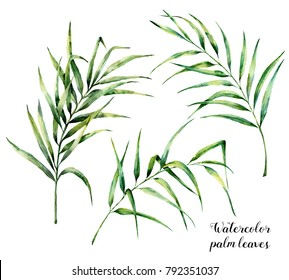 Watercolor palm leaves set. Hand painted botanical illustration with palm branches isolated on white background. Exotic leaves for design or print.