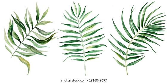 Watercolor palm tropical leaves set illustration  isolated