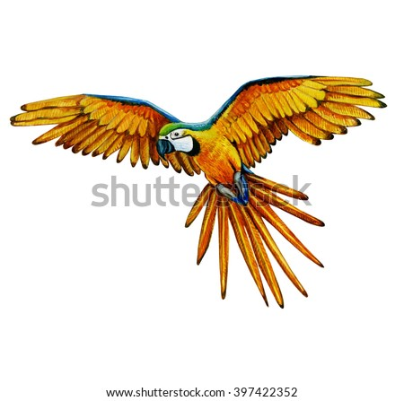 watercolor parrot illustrate colorful bird painting stock