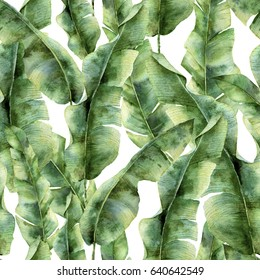Watercolor pattern with banana palm leaves. Hand painted exotic greenery branch. Tropic plant isolated on white background. Botanical illustration. For design, print or background.