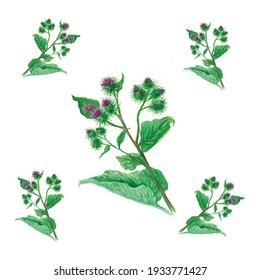 watercolor pattern, botanical illustration common burdock, pattern for textiles
