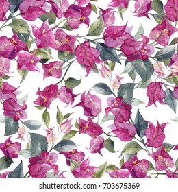 Watercolor pattern with bougainvillea flowers, tropical purple flower