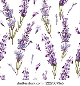 Watercolor pattern with Lavender. Hand painting. Watercolor.  Illustration