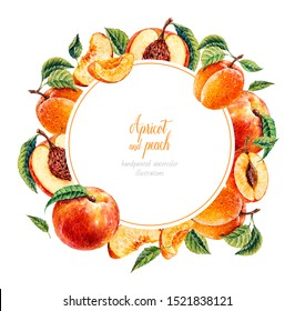Watercolor peach and apricot. Botanical watercolor hand drawn illustration. Peach. Apricot. Watercolor fruits.