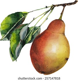 Watercolor pear painting with three leaves on a branch