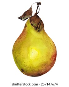 Watercolor pear painting with two leaves