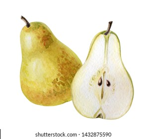 Watercolor pears.Yellow-green whole ripe fruit and its half.Illustration on summer or autumn theme. Isolated image on white background. Hand-drawn sketch.