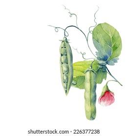 watercolor peas