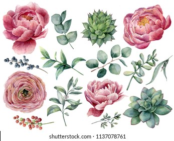 Watercolor peony, succulent and ranunculus floral set. Hand painted red and blue berry, eucalyptus leaves isolated on white background. Illustration for design, print