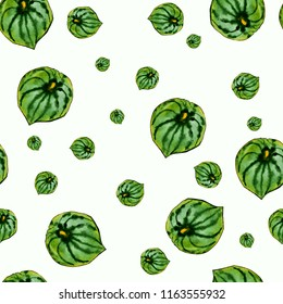 Watercolor peperomia leaves isolated on white. Seamless pattern.
