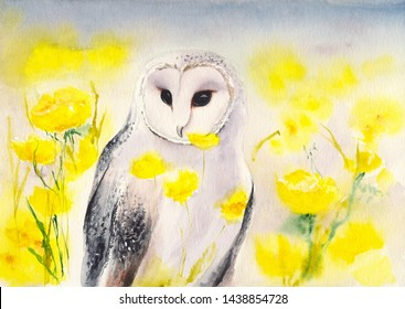 Watercolor picture of  a white snowy owl in the field of bright yellow flowers