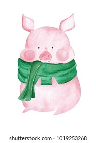 Watercolor Pig in scarf. 2019 Chinese New Year of the Pig. Christmas greeting card