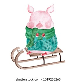 Watercolor Pig in sweater on sledge. 2019 Chinese New Year of the Pig. Christmas greeting card