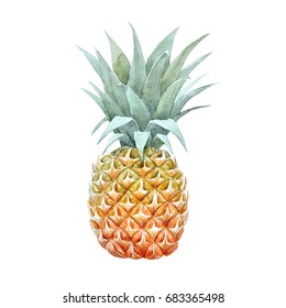 Watercolor pineapple drawing, isolated object on white background