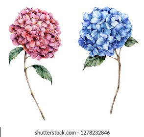 Watercolor pink and blue hydrangea set. Hand painted flowers with leaves and branch isolated on white background.  Nature botanical illustration for design, print. Realistic delicate plant