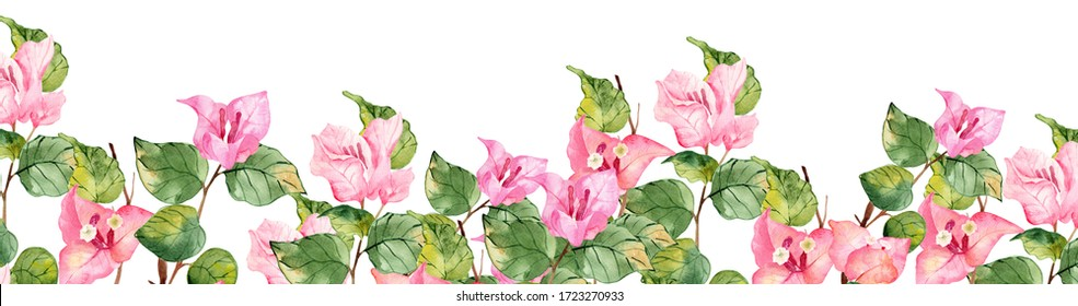 Watercolor Pink Bougainvillea Frames, Borders, Twigs and Vines. Hand painted watercolor painting isolated on white background, a branch with leaves and tropical flowers, for wedding invitation invitat