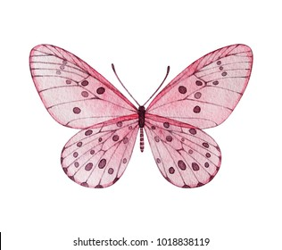 Watercolor pink butterfly. Isolated illustration.