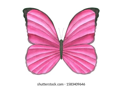 Watercolor pink butterfly isolated on white background. Tropical butterfly for design cards, invitations, children's wear. Butterfly art poster. Realistic style.
