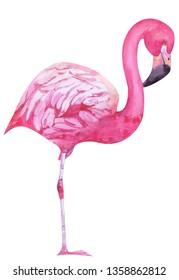 Watercolor pink flamigo standing on one leg