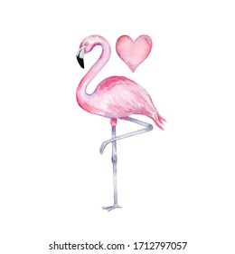 Watercolor pink flamingo standing on one leg with a heart on a white background