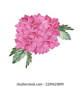 Watercolor pink flower isolated on white background. Hydrangea hand drawn.